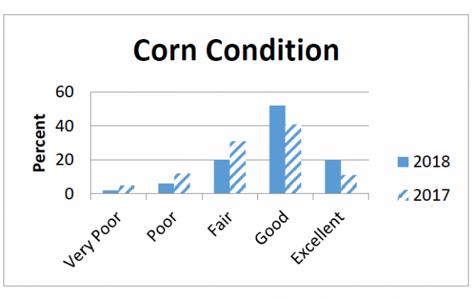 Corn conditions