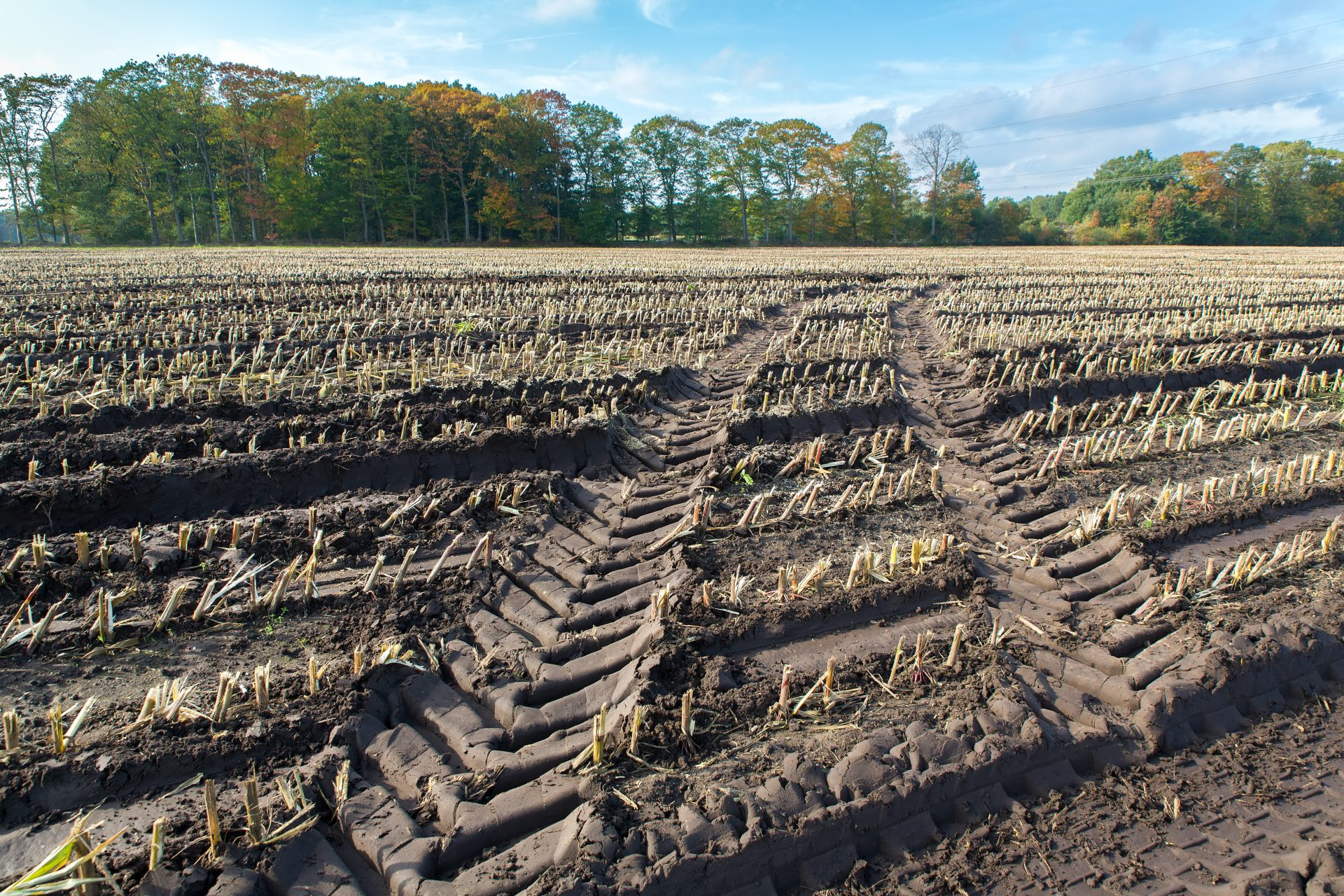 Indiana Corn and Soybean Harvest Behind, Pioneer Agronomist Says Get Aggressive